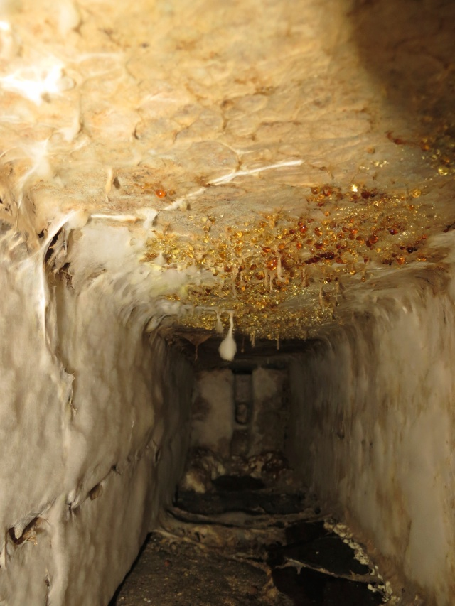 dry rot in a sub floor